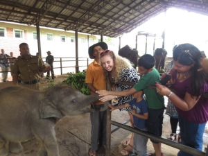 Feeding the baby elephants