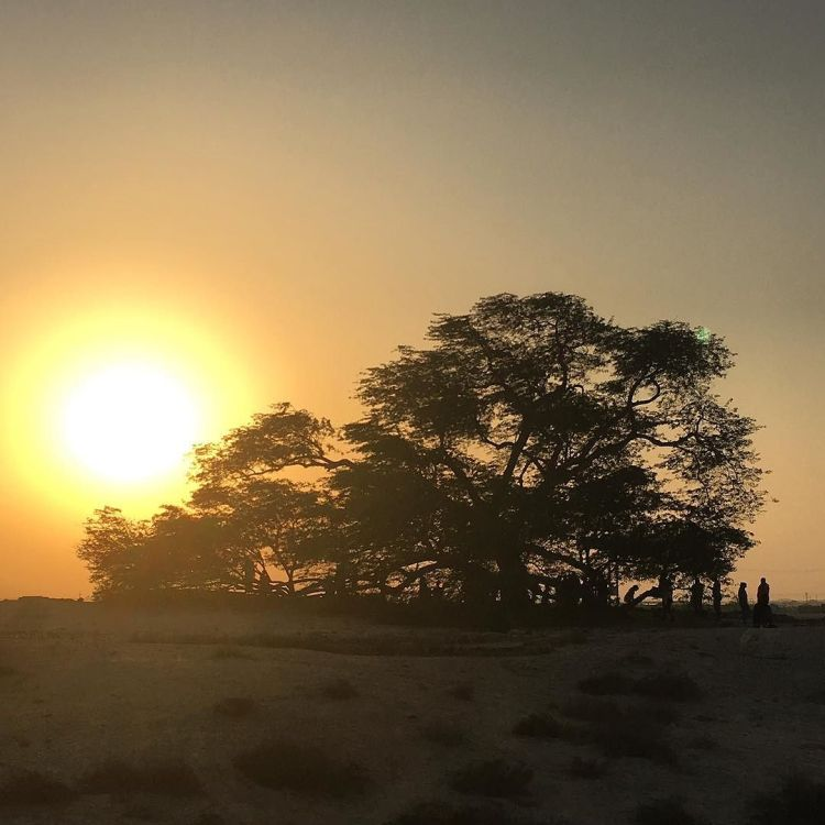 tree_of_life-_not_the_shop-_the_actual_tree__in__bahrain-__treeoflifeb-1