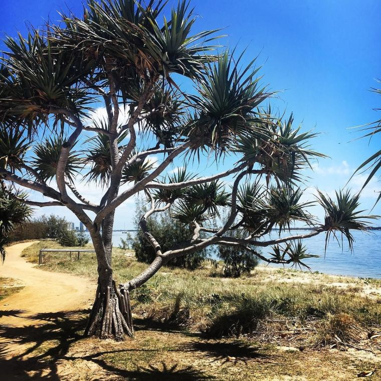 i_just_love_these_trees_in_the__broadwaterparklands-_it_s_just_quintessential__qld_for_me_-1