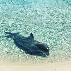 i_love_these_animals_so_much-__dolphins_truly_look_you_in_the_eye-_they_are_such_spiritual_animals-_lovely_moments_just_sitting_watching_this_one_present-__seaworldaus