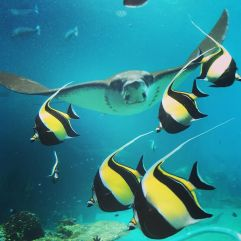 under_the_sea-_under_da_sea-__seaworldaus-1